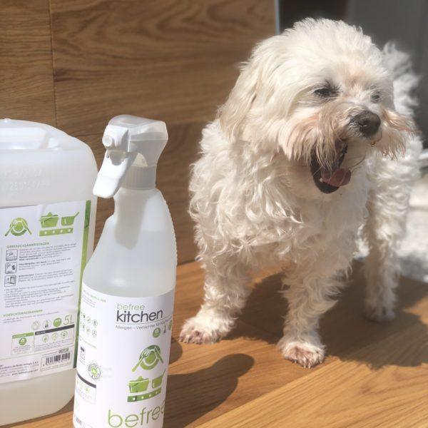 kitchen mit Hund